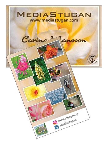 MediaStugan's business card.